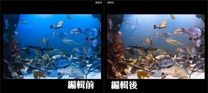 1水族箱(或是在水下)直接拍,有色偏,運用Lightroom把它調回正確顏色。